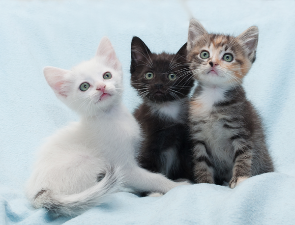 Kitten Care - Family Veterinary Clinic - Crofton & Gambrills MD